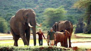 Elephants Laikipia Plateau