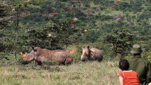Rhinos Laikipia Plateau
