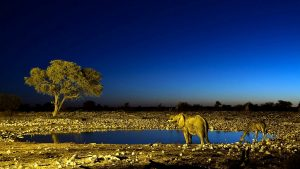 Savannah at night, Kenya