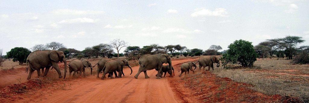 Kenya Safari-Parco Nazionale Tsavo