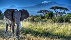 Monte Kilimanjaro Parco Nazionale Amboseli-Vacanze Kenya